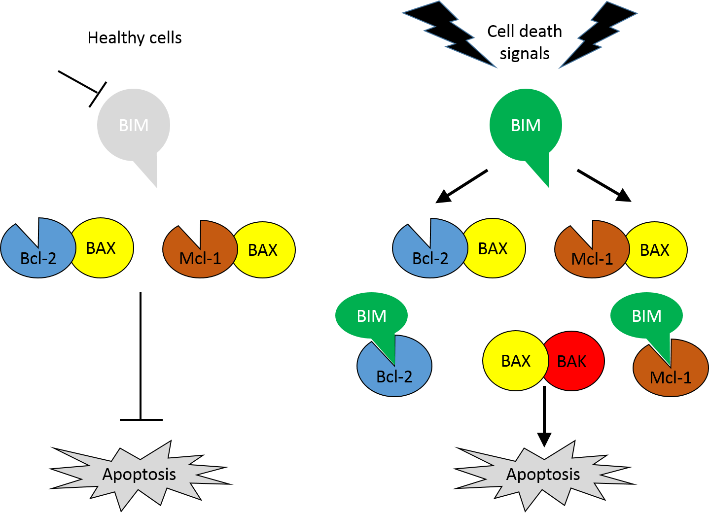 The Potential Use Of BH3 Mimetics To Overcome Apoptosis